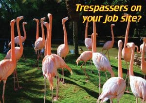 Flamingos; trespassers on your job site?