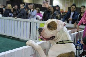 Temporary fence for special events pet expo